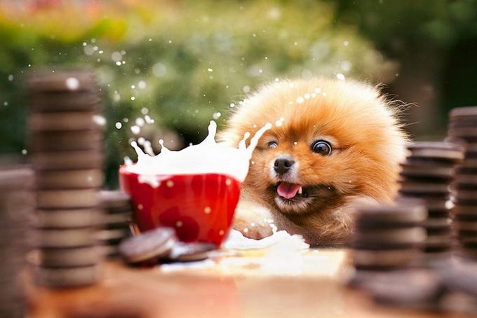 смешные фото собак 4 (680x454, 171Kb)