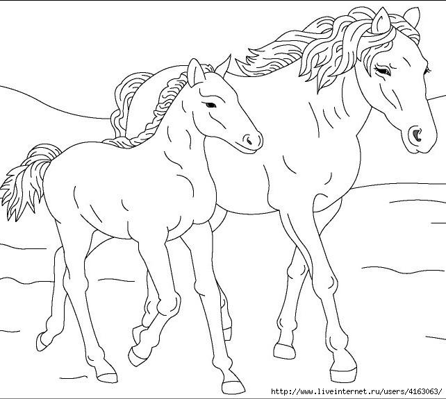 Horse-shablon (642x575, 146Kb)