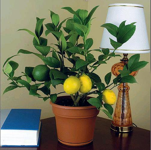 Комнатные растения домашних условиях