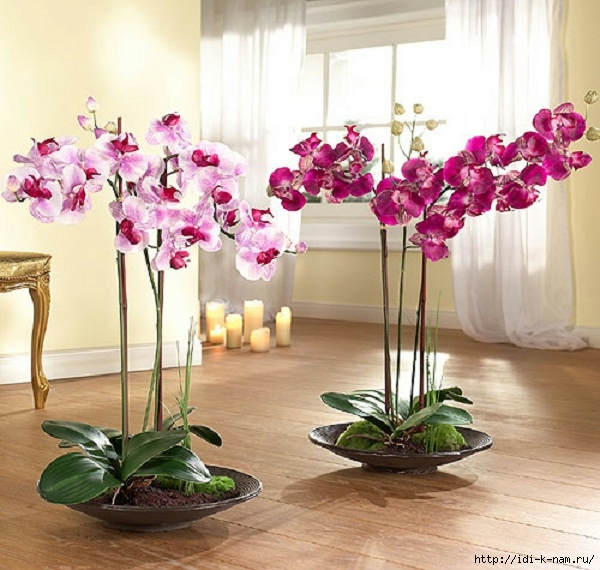 1342429406_orhidei (600x570, 230Kb)