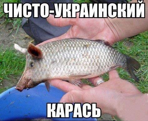 smeshnie_kartinki_138546451763 (473x387, 133Kb)