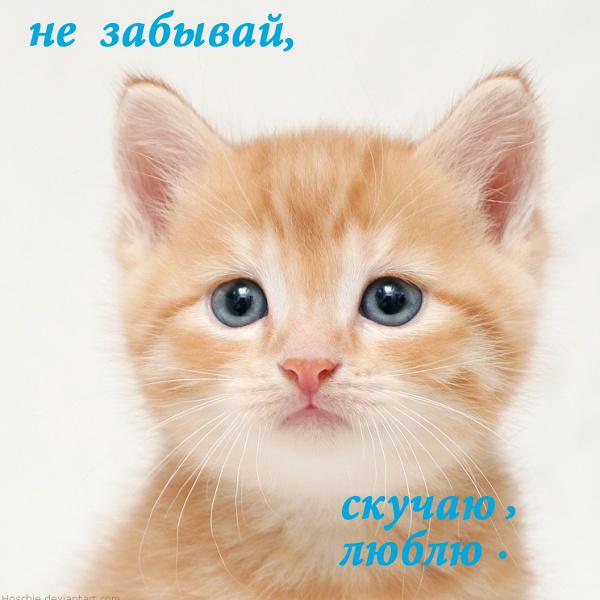 28_04_2009_0773009001240866453_oliver-pietern (600x600, 219Kb)