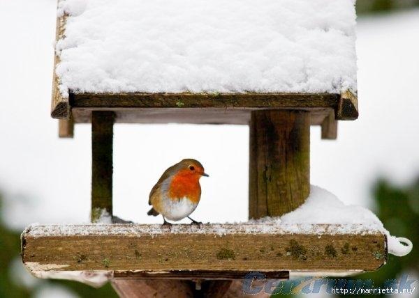 Чем кормить птиц и СКВОРЕЧНИК своими руками (31) (600x428, 110Kb)
