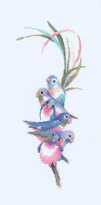 Rainbow Birds Радужные птицы.