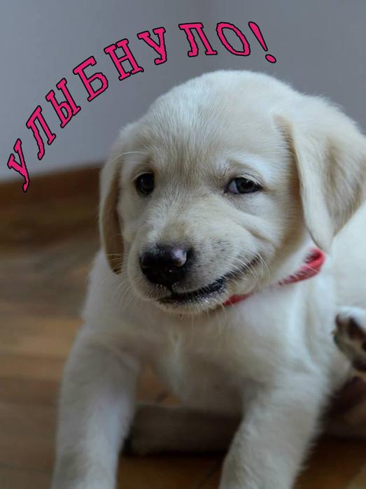 1373913576_funny_animals_20130715_улыбнуло (523x700, 190Kb)