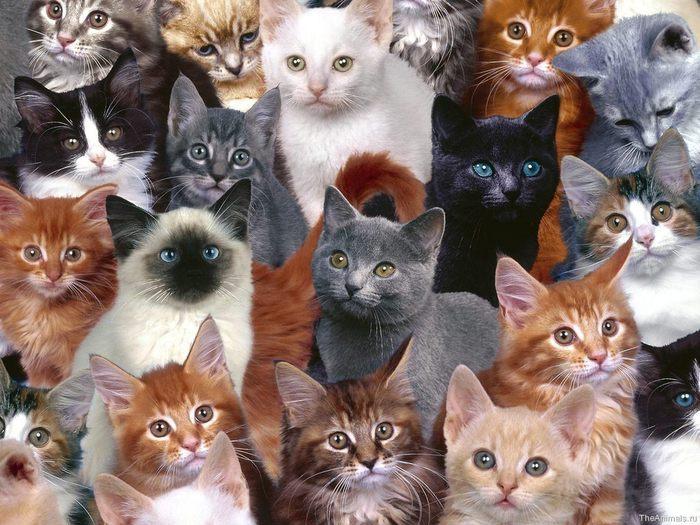 medium_Collection_of_Kittens (700x525, 89Kb)