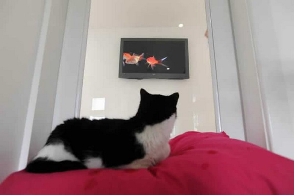 The_Ings_Luxury_Cat_Hotel_TV (600x399, 39Kb)