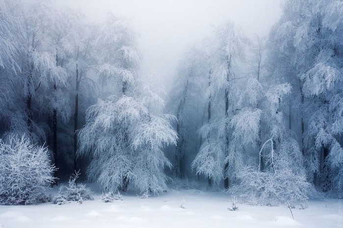 3554158_WinterLandscapes06800x533 (700x466, 94Kb)