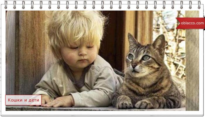 Почему кошки боятся детей