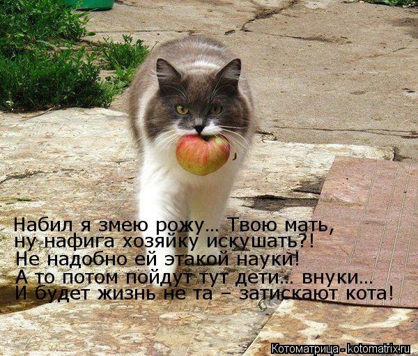 kotomatritsa_eC (600x511, 251Kb)