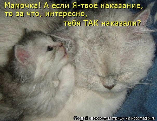 kotomatritsa_FH (604x465, 147Kb)