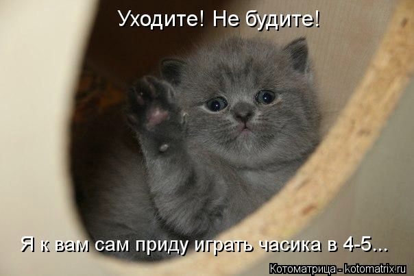 kotomatritsa_IM (604x403, 81Kb)