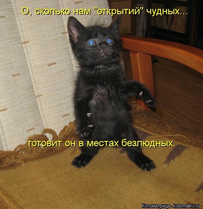 kotomatritsa_um (678x700, 348Kb)
