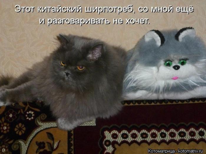 kotomatritsa_Yp (700x524, 229Kb)