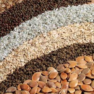 Семена-и-почва (310x310, 115Kb)