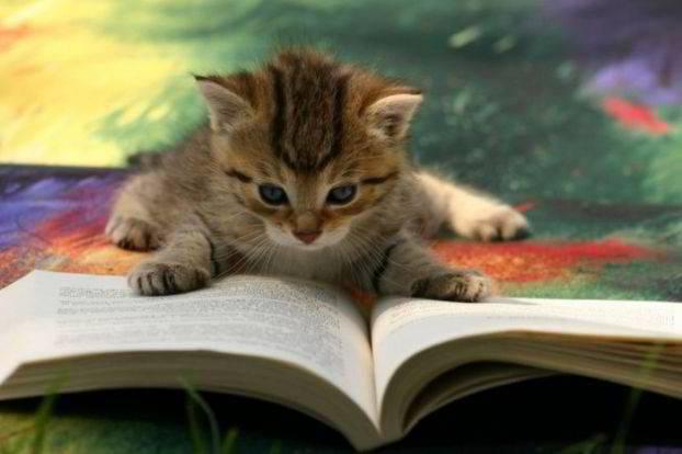 3677632_catreadingbook (622x414, 25Kb)