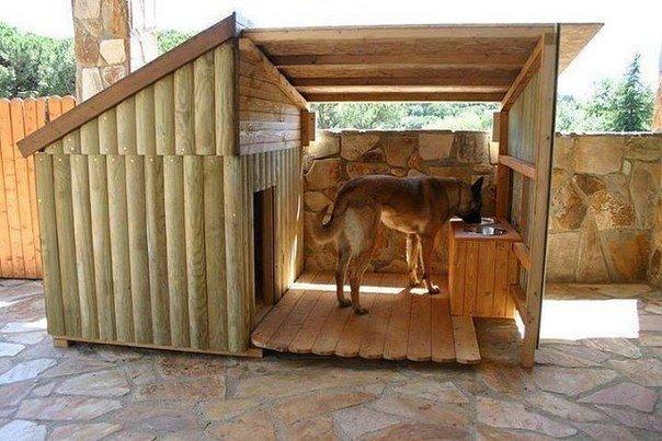 домиу для собаки (604x403,