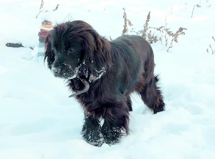 собака на снегу/4800487_48 (700x518, 278Kb)