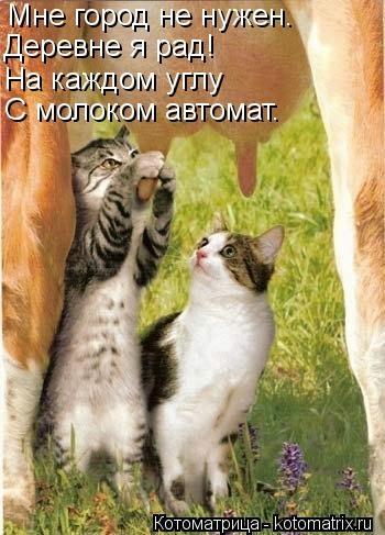 kotomatritsa_47 (350x487, 107Kb)
