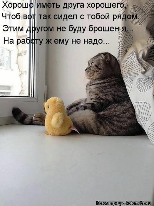 kotomatritsa_eB (524x700, 215Kb)