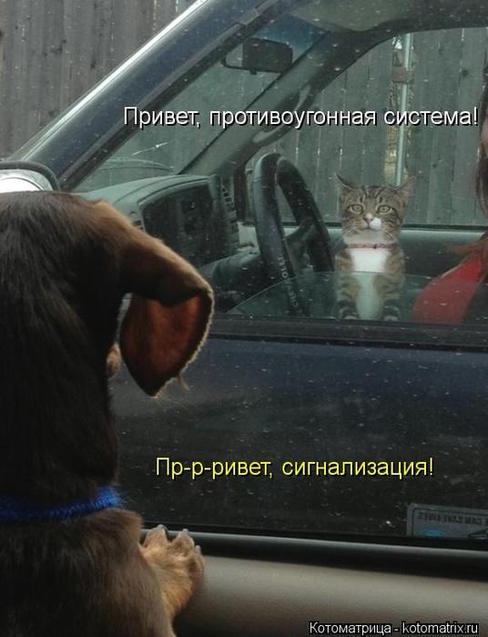 kotomatritsa_O- (536x700, 213Kb)