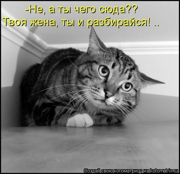 kotomatritsa_r (600x581, 112Kb)
