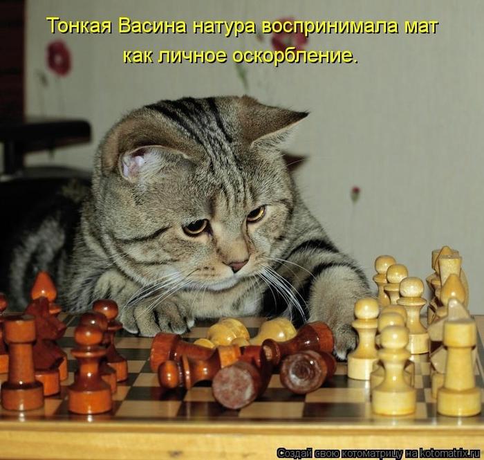 kotomatritsa_sq (700x665, 295Kb)