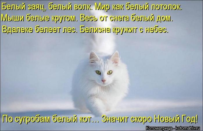 kotomatritsa_Jf (700x454, 189Kb)
