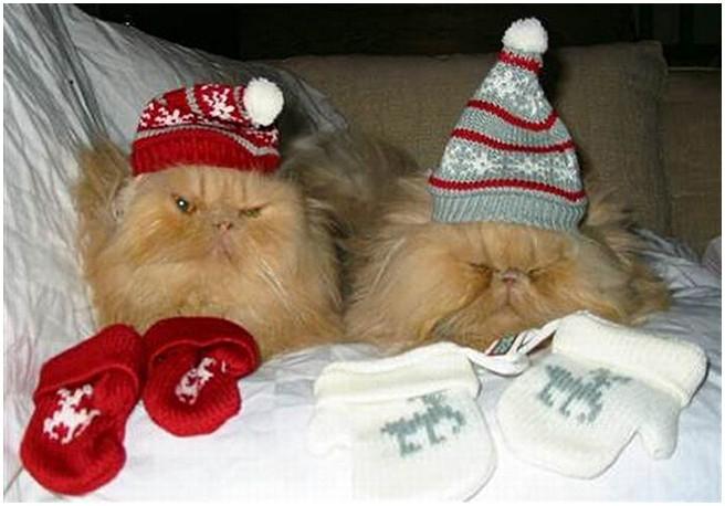 рождественские и новогодние коты1а (656x458, 151Kb)