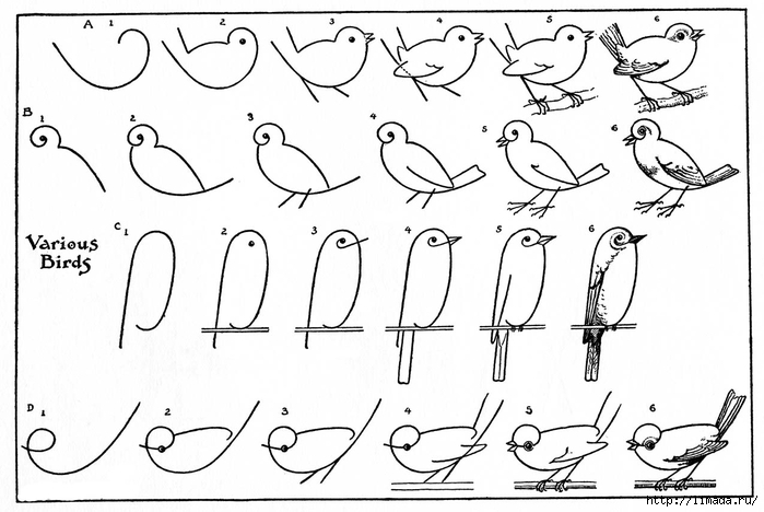 draw-birds-Vintage-Image-Graphics-Fairysm (700x468, 182Kb)