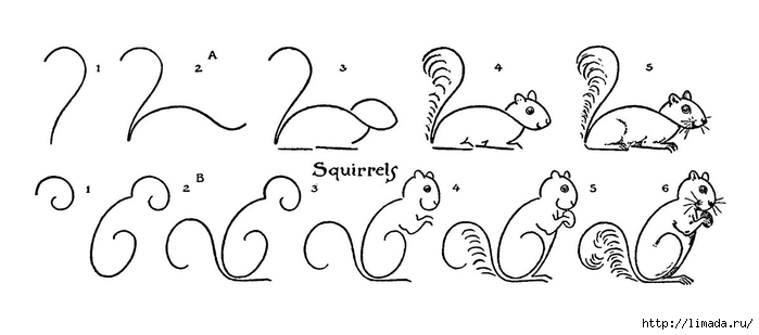 draw-squirrels-gfairysm (700x309, 81Kb)