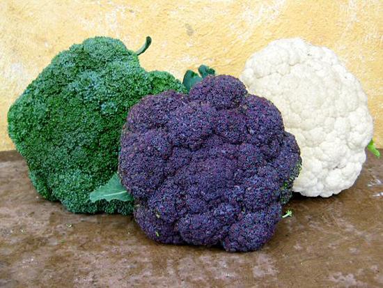 fal2007_broccoli_vs_cauliflower (550x413, 214Kb)