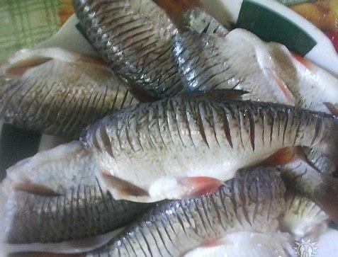 рыба (477x363, 112Kb)