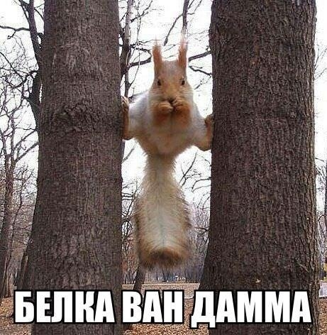 1387486660_www.radionetplus.ru-4 (461x472, 169Kb)