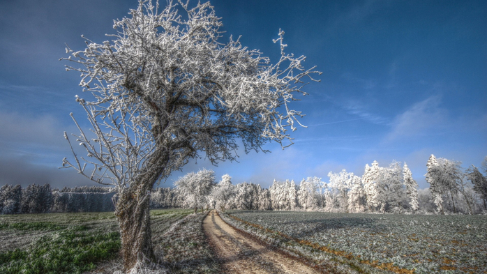 landscapes-nature-land-tree-snow (700x393, 346Kb)