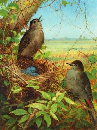 1355665213-thurshes-nest-1878 (534x648, 99Kb)