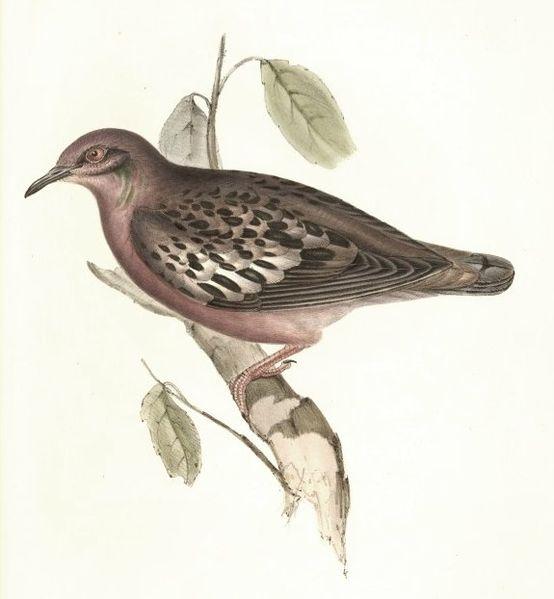 рисунки птиц: