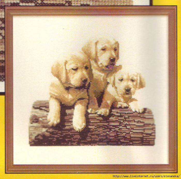 Labrador Puppies (700x691