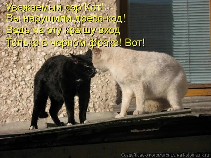 kotomatritsa_3y (700x524, 255Kb)
