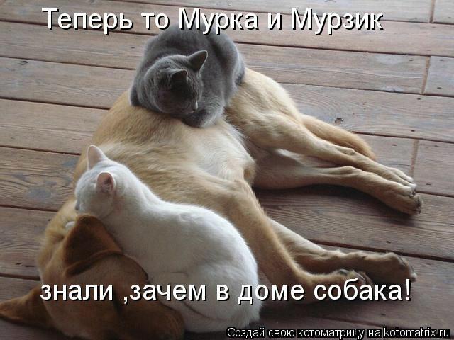 kotomatritsa_5H (640x480, 132Kb)