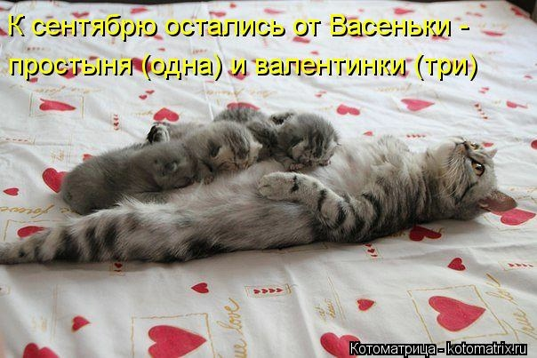 kotomatritsa_8l (604x403, 139Kb)