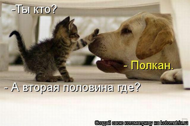 kotomatritsa_D9 (640x426, 95Kb)
