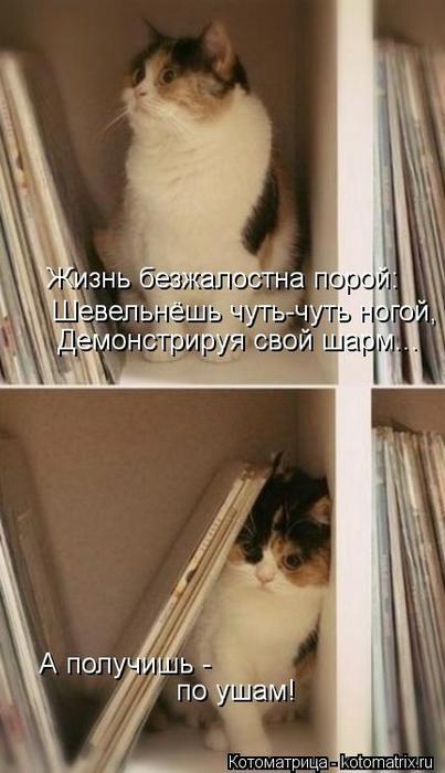 kotomatritsa_o (403x700, 171Kb)