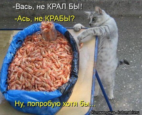 kotomatritsa_xK (595x480, 168Kb)