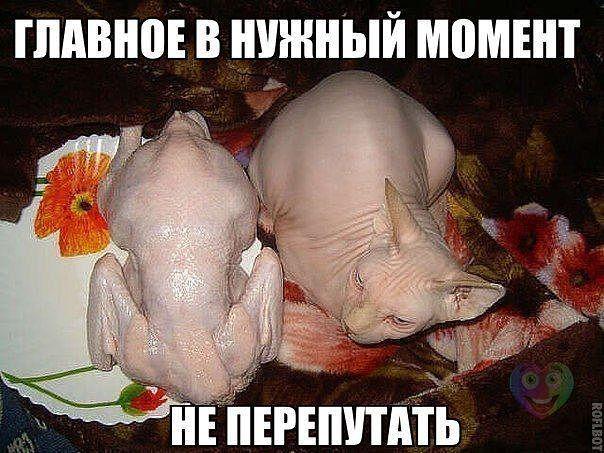 смайлик фу: