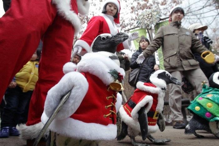 пингвины фото 5 (700x466, 150Kb)