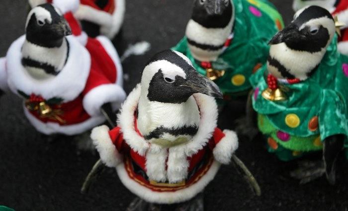 пингвины фото 12 (700x424, 103Kb)
