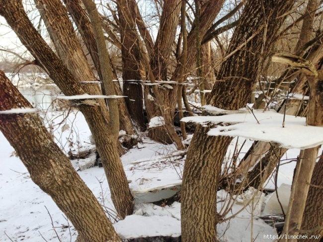 629555 r3l8t8d 650 ice and snow on tree after flood trippy effect