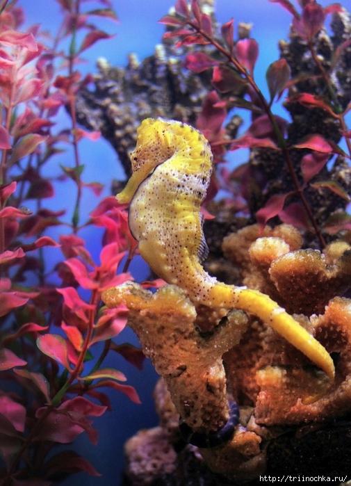 Загадочный подводный мир не только рыб!