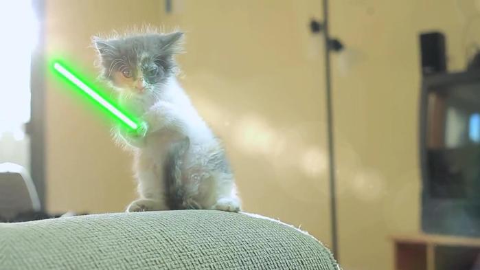 3821971_Jedi_Kittens_mp4_snapshot_00_01_2013_12_24_21_32_23 (700x393, 25Kb)